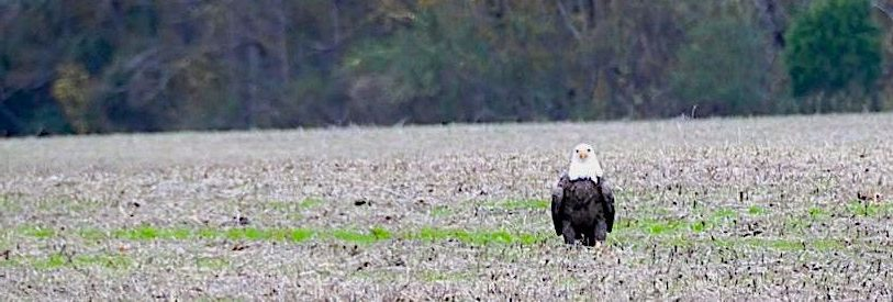 One of the many reasons we must preserve rural land in York County and the Historic Triangle: